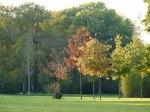 Sonniger Herbst in Park von Sanssouci (c) Frank Koebsch (2)