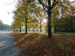 Sonniger Herbst in Park von Sanssouci (c) Frank Koebsch (6)