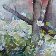 Blütenmeer im Frühling (c) Aquarell mit Buschwindröschen von FRank Koebsch