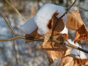 Der Winter ist zurückgekehrt (c) FRank Koebsch