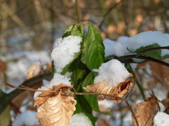 Grün aus dem vergangenen Jahr (c) FRank Koebsch
