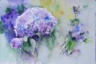 Hortensie in Blau (c) Aquarell von Hanka Koebsch