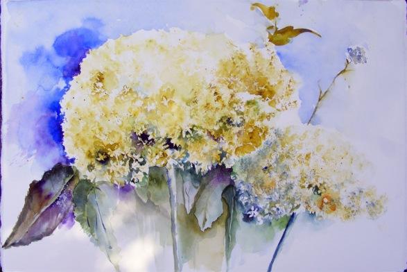 Hortensie in Weiß (c) Aquarell von Hanka Koebsch