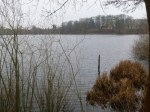 Ufer des Faulen Sees (c) Frank Koebsch