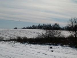 winterliche Wiesen bei Sanitz (c) Frank Koebsch