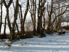 Winterspaziergang (c) Frank Koebsch