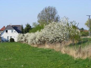Blüten am Wegrand (c) Frank Koebsch
