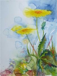 Das Gelb des Löwenzahns (c) Aquarell von Frank Koebsch
