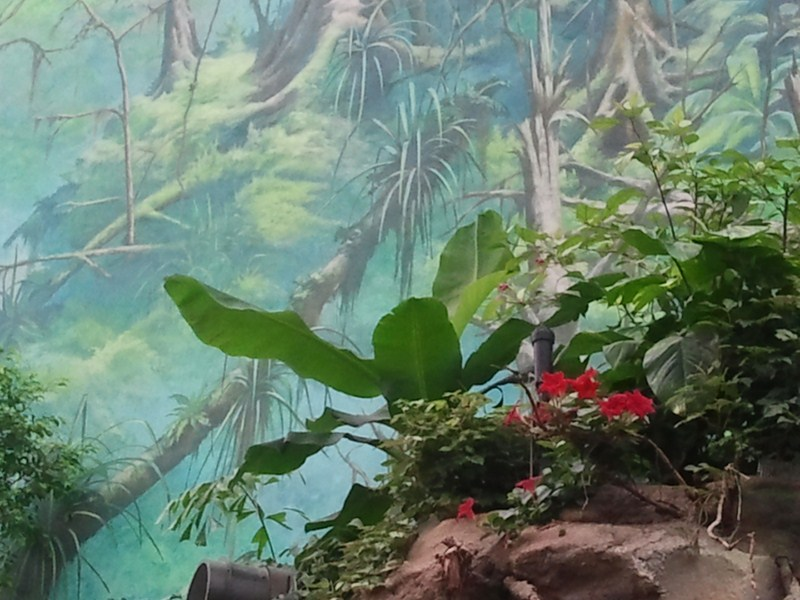 Wandmalerien Im Chinaski : Die gr??ten wandmalereien in rostock bilder aquarelle