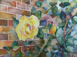 Bunte Mauer (c) Rosen Aquarell von Frank Koebsch