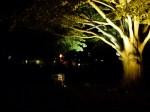 Illuminierte Bäume auf dem Doberaner Kamp (c) Frank Koebsch
