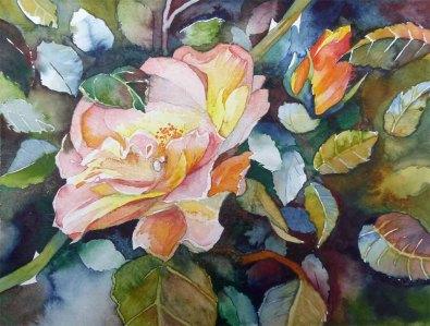 Sommerende (c) Rosen Aquarell von Frank Koebsch