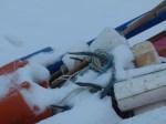 Anker der Stieren im Schnee (c) Frank Koebsch