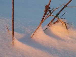 Die Sonne färbt den Schnee (c) Frank Koebsch 1