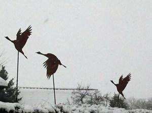 Kraniche im Winter (c) Frank Koebsch
