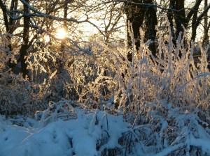 Lichtreflexe im Winter (c) Frank Koebsch