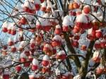 Weihnachtsäpfel (c) Frank Koebsch