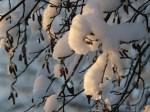 Winter im Garten (c) Frank Koebsch