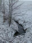 Der Winter ist zurück (c) Frank Koebsch