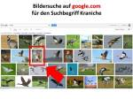 Google.com Bildersuche für den Suchbegriff Kranich (1)