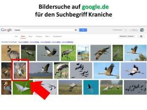 Google.de Bildersuche für den Suchbegriff Kranich (1)