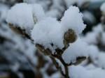 Magnolien im Schnee (c) Frank Koebsch
