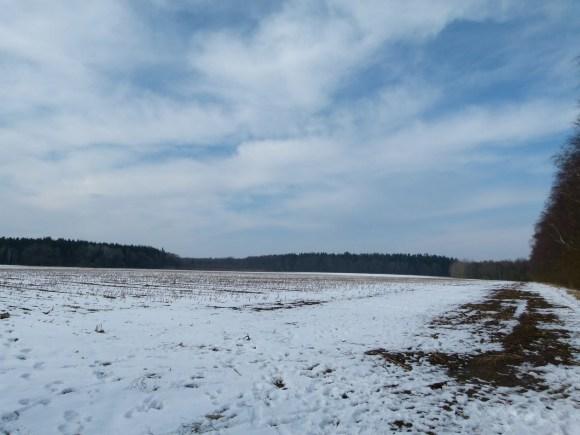 Können Sie die Kraniche auf dem Maisfeld entdecken (c) Frank Koebsch (1)