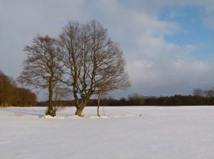 Winterliche Wiese (c) Frank Koebsch (2)