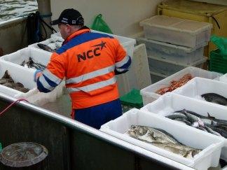 Fischmarkt im Hafen Oslos (c) Frank Koebsch