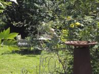 Schnappschüsse aus dem Garten der alten Büdnerei (2)