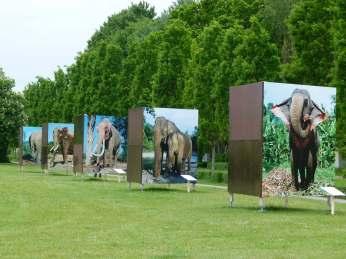 Elefanten - Life Size in Zingst (c) Frank Koebsch