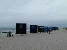 Giganten der Meere am Strand von Zingst (c) Frank Koebsch (1)