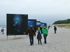 Giganten der Meere am Strand von Zingst (c) Frank Koebsch (2)