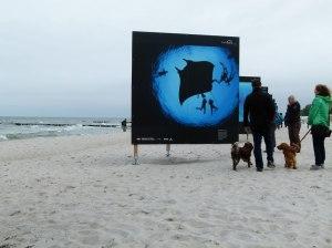 Giganten der Meere am Strand von Zingst (c) Frank Koebsch (3)