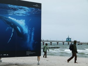 Giganten der Meere am Strand von Zingst (c) Frank Koebsch (4)