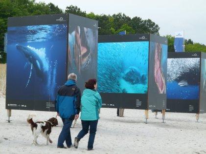 Giganten der Meere am Strand von Zingst (c) Frank Koebsch (6)