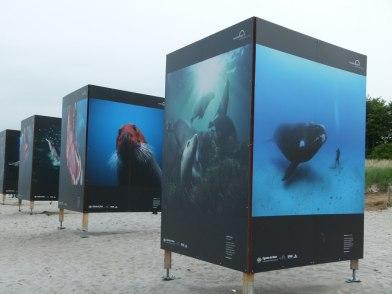 Giganten der Meere am Strand von Zingst (c) Frank Koebsch (7)