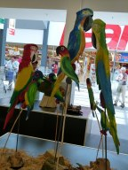 Papageien von Helmut Storch im Ostsee Park Rostock (c) FRank Koebsch