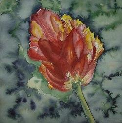 Tulpe auf grünem Grund (c) Aquarell von FRank Koebsch