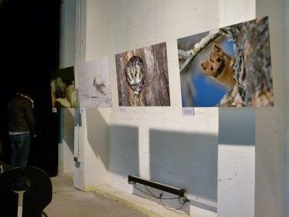 Wilde Tiere Deutschlands – Fotos von Dietmar Nill in der Zingster Multimediahalle © Frank Koebsch (3)
