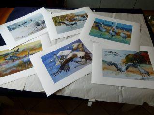 Drucke meiner Kranich Aquarelle (c) Frank Koebsch