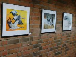 Meine Kranich Aquarelle im Haus der SWR vor der Eröffnung (c) Frank Koebsch (1)