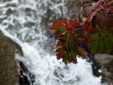 Pioneer Square Seattle - Waterfall Garden (c) FRank Koebsch (4)
