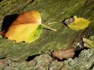 Herbst am Schaalsee (c) FRank Koebsch (3)
