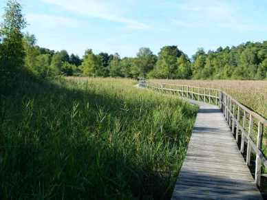 Moorerlebnispfad am Schaalsee (c) FRank Koebsch (3)