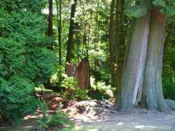 Vancouver - Vorgeschmack auf den Regenwald Alaskas (c) Frank Koebsch
