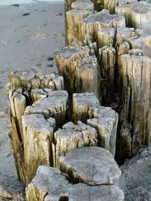 Buhnen am Kühlungsborner Strand (c) FRank Koebsch (2)