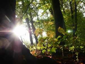 Herbstsonne (c) Frank Koebsch (1)