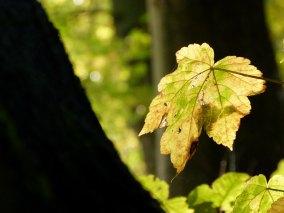 Herbstsonne (c) Frank Koebsch (2)