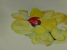 wunderbare Details als Aquarell auf Leinwand (c) Frank Koebsch